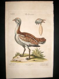 Edwards Seligmann C1760 Folio Hand Col Bird Print. Male Bustard